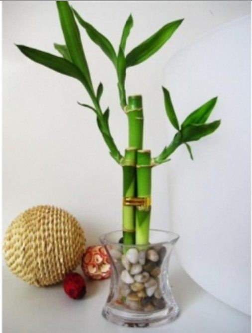 How to use feng shui in your workspace the muse - Good luck plants feng shui ...
