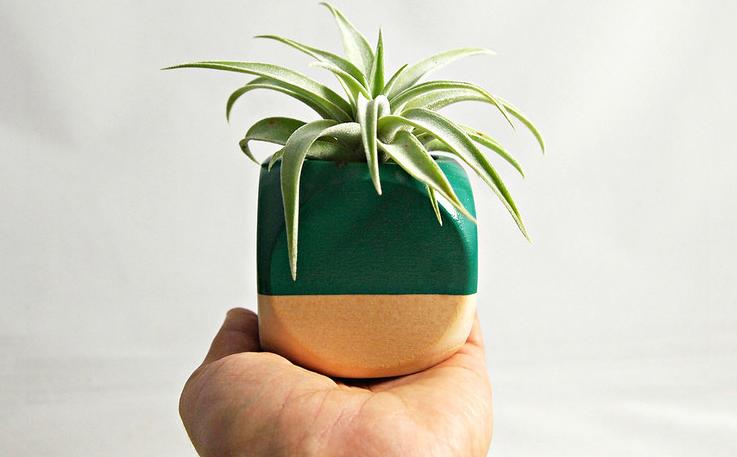 Good Desk Plants Hostgarcia
