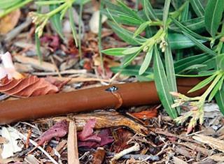 Rain Bird Company Image