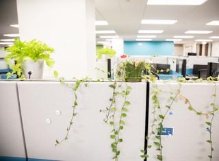 Careers - Office Life Full Package