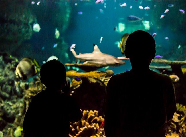 National Aquarium Careers