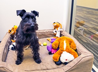 Careers - Office Life Animal Love